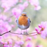 Image of bird in blooming tree