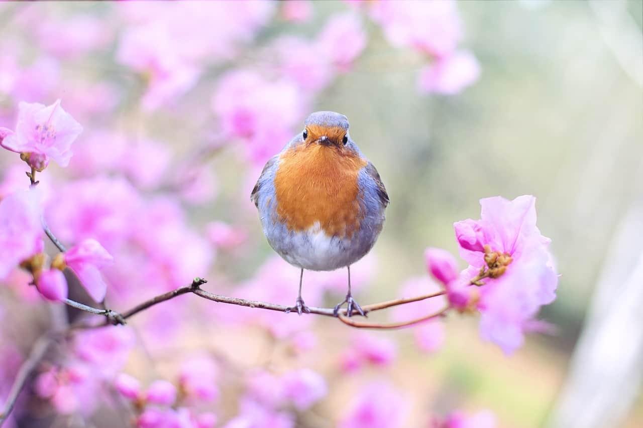 Image of bird in blooming tree