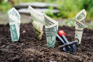 Dollar bills planted in dirt, representing saving for retirement at 50