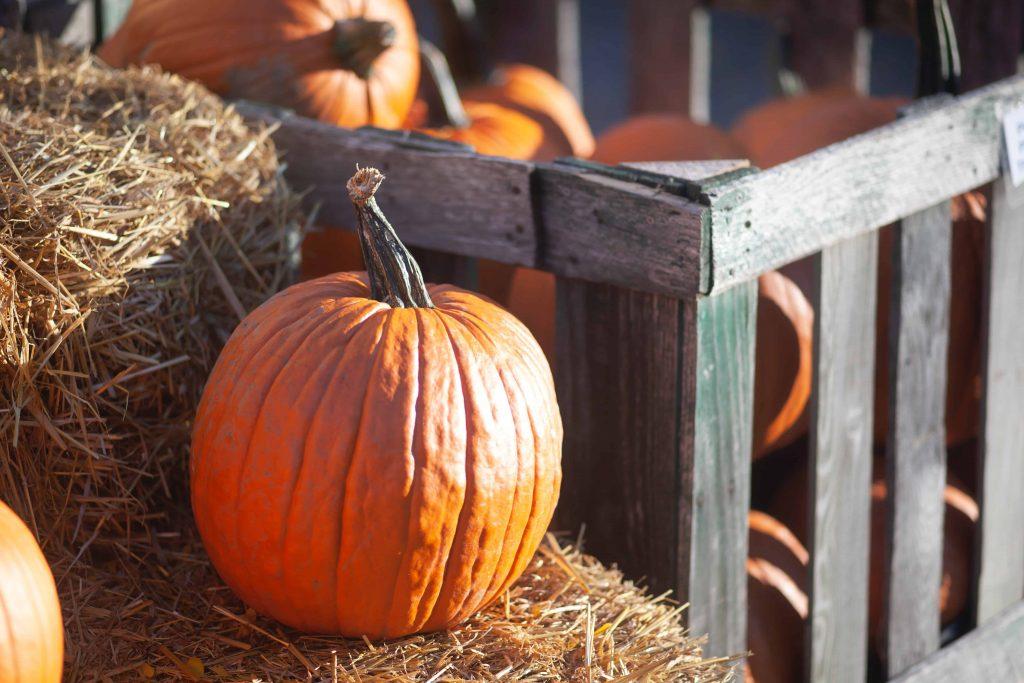 Pumpkins representing October Financial Checklist