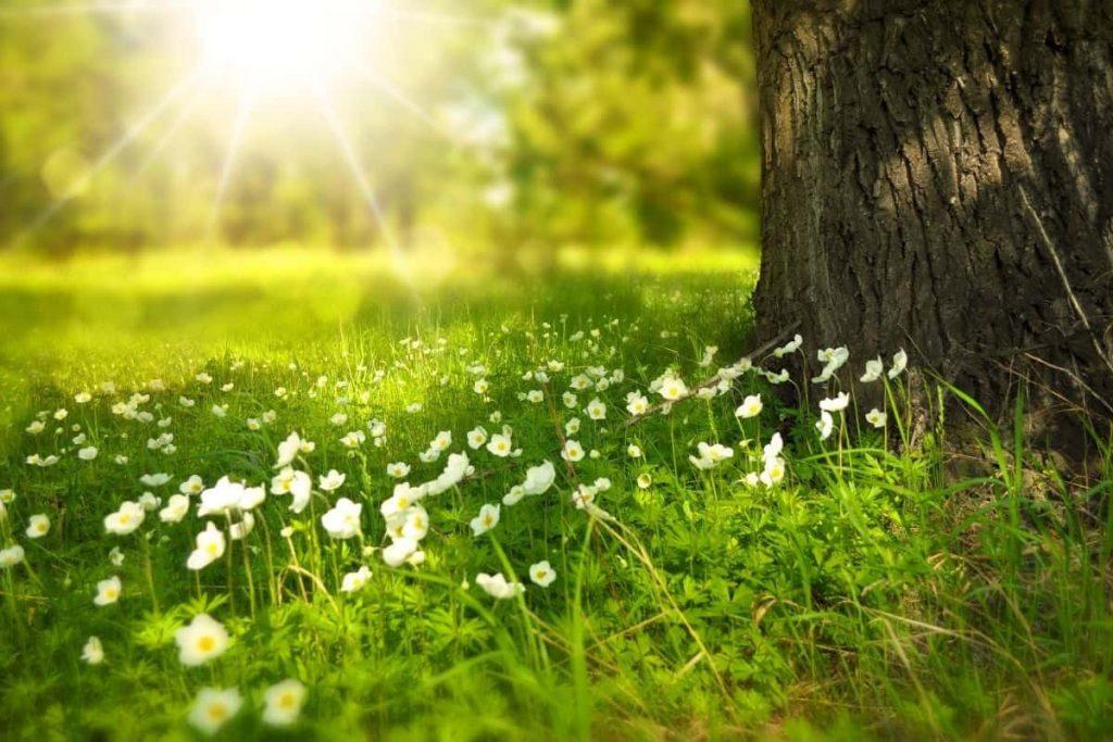 Green meadow representing May financial checklist